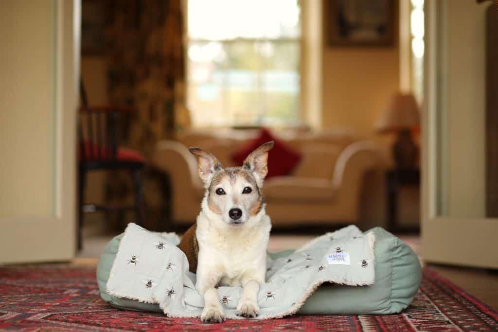 Dog Friendly Lark Holiday Cottage
