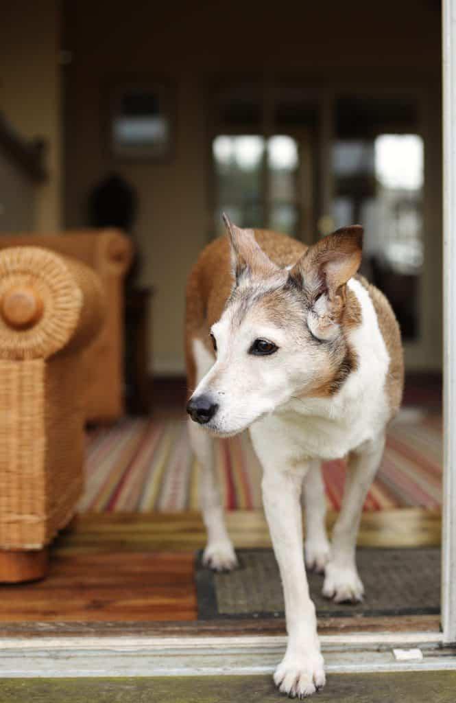 Dog at Lark Holiday Cottage Norfolk