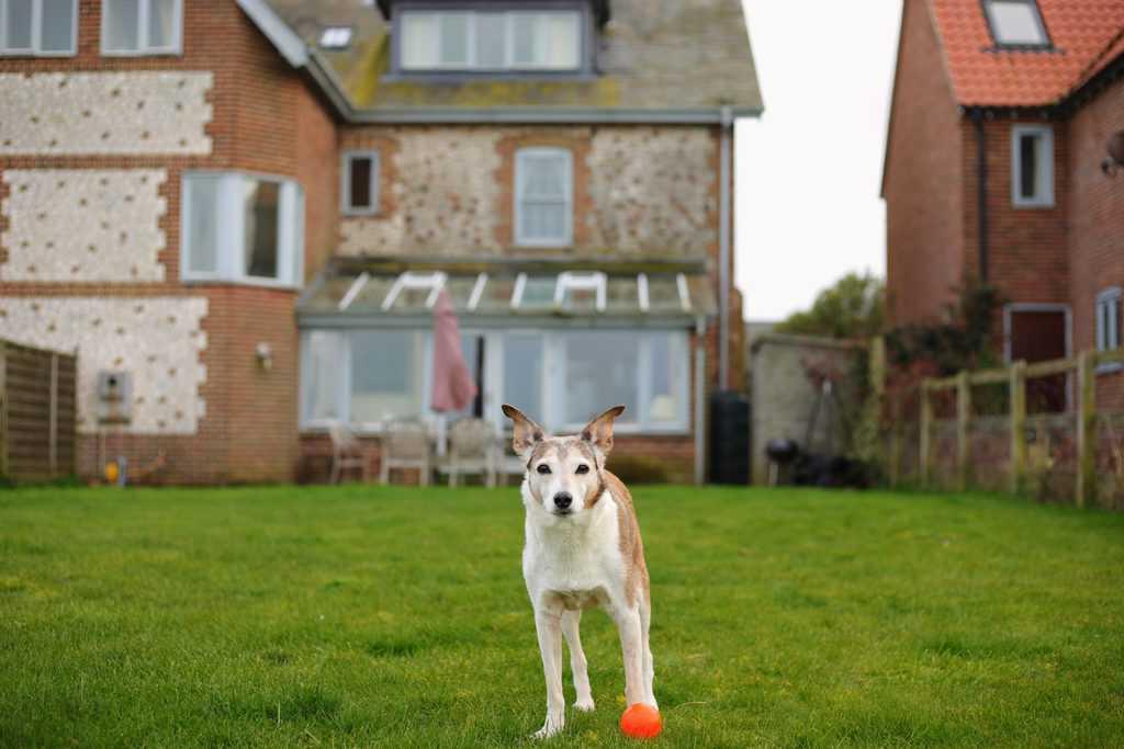 Dog Friendly Enclosed Garden at Lark Cottage Norfolk