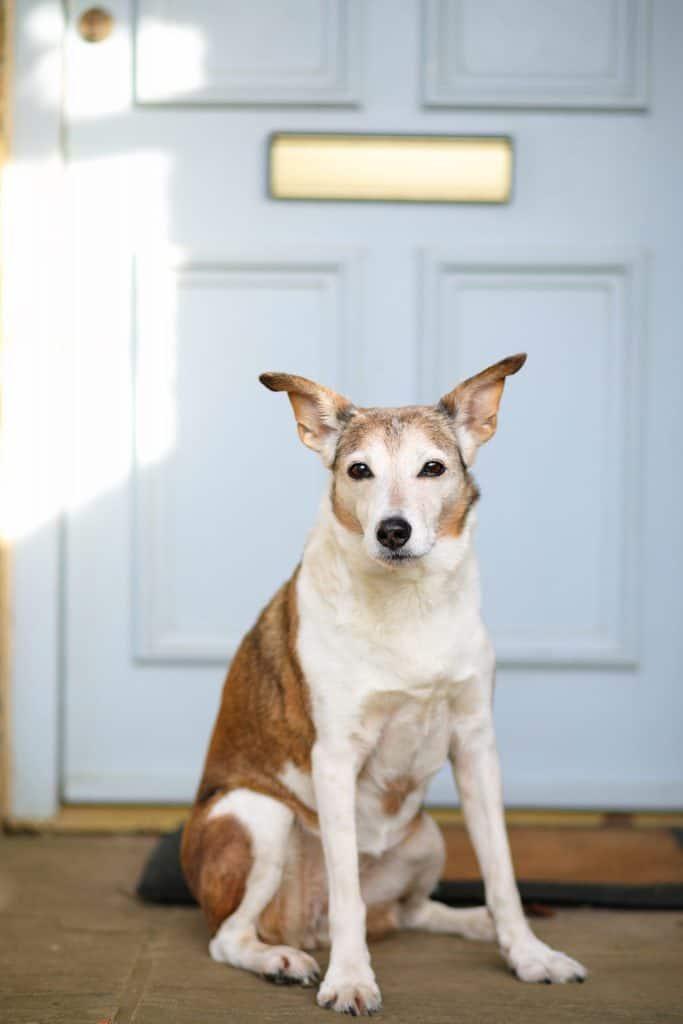 Lark Cottage Dog Friendly North Norfolk