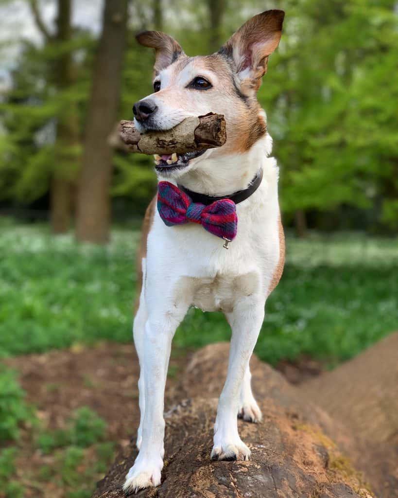 Dog Walk in Wiltshire