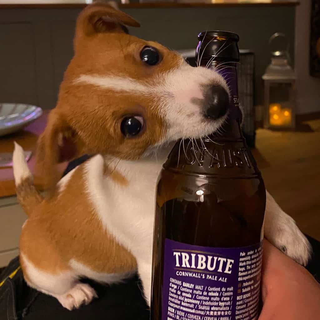 Puppy with Beer Bottle