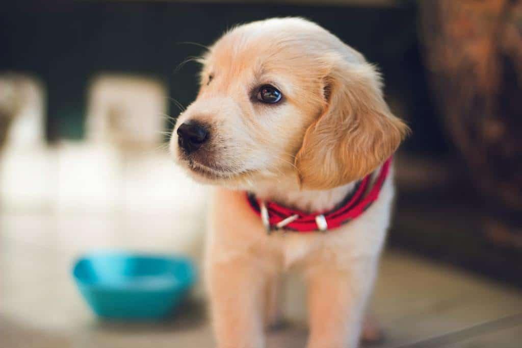 Puppy Support
