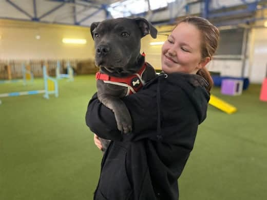 Paws Indoors Dog Daycare Centre Southend