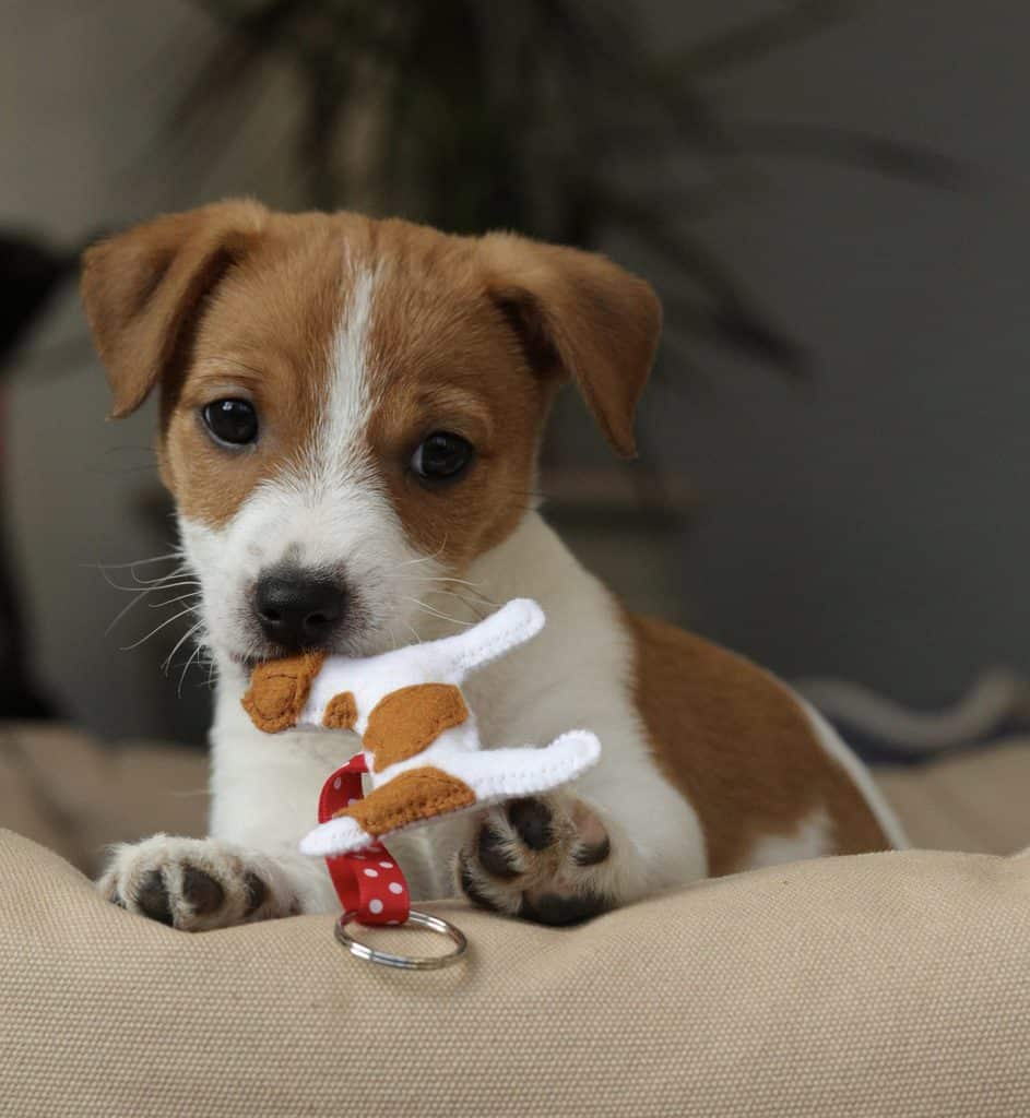 Puppy with Dog Keyring by Misheleneous