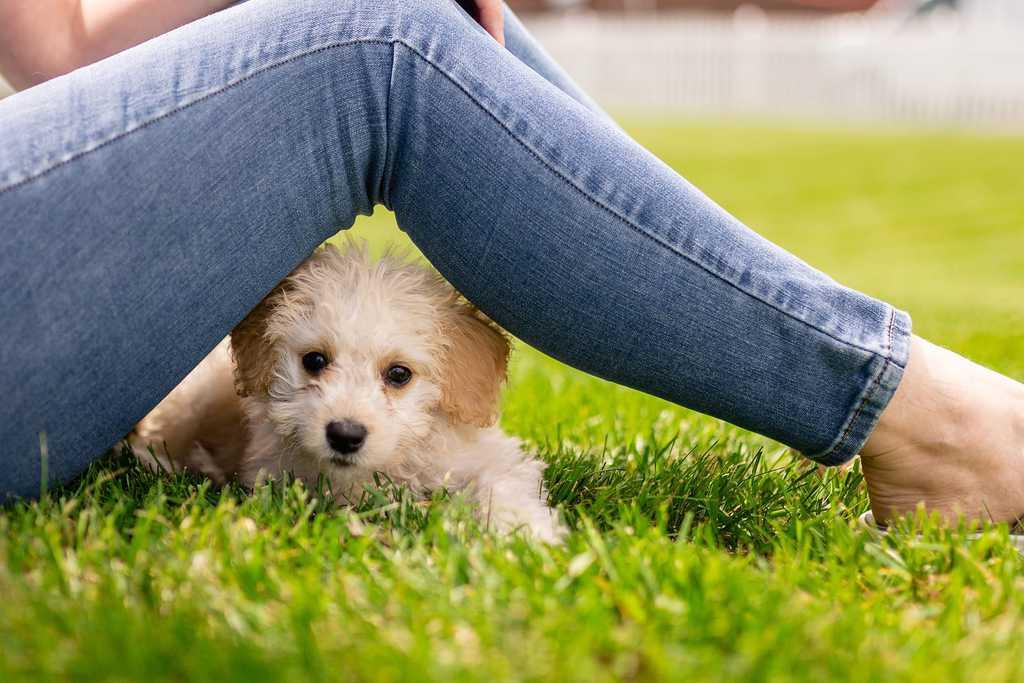 First Time Puppy Parent