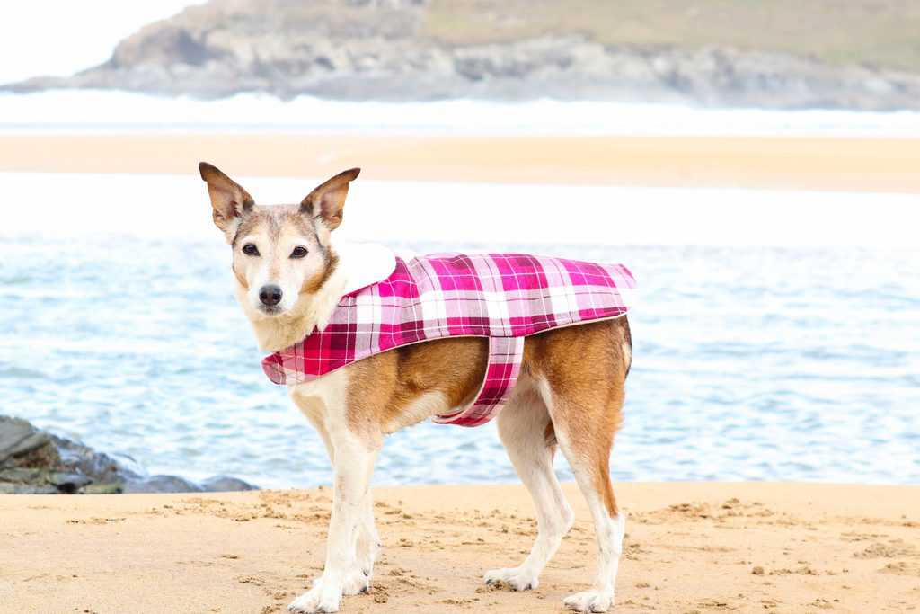 Four Paws Outerwear Dog Coat