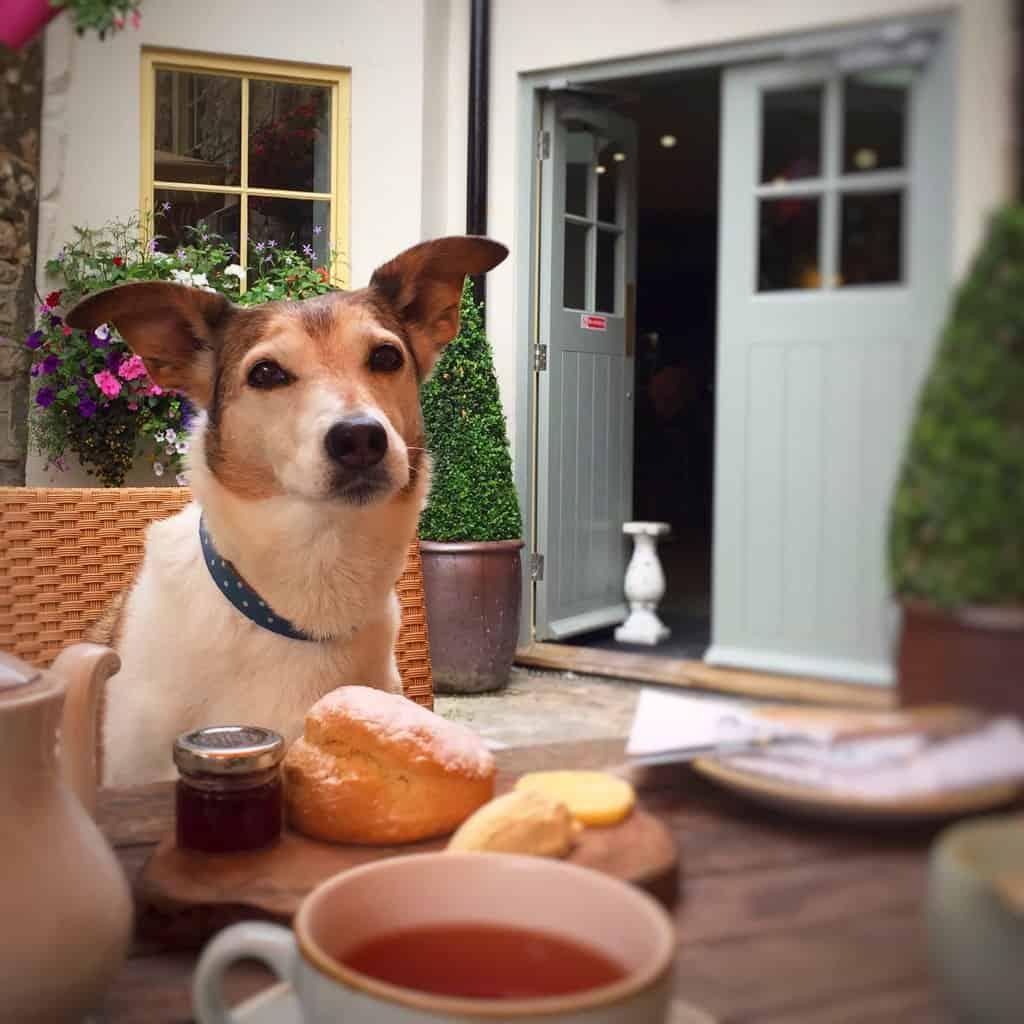 Dog Friendly Pub Wiltshire