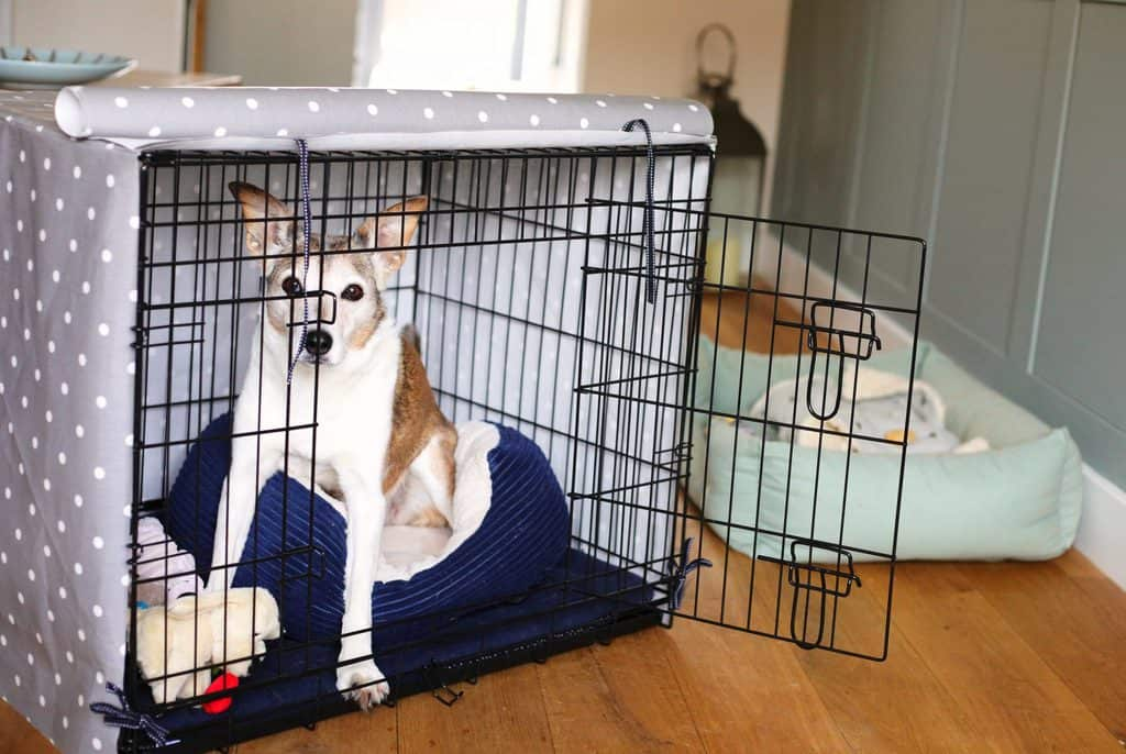 Dog In Puppy Crate