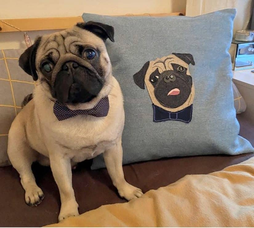 Dune Chick Pug Portrait Cushion