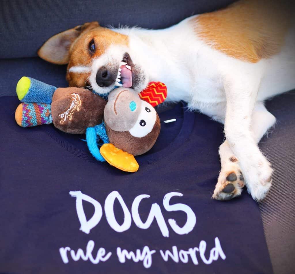 Dogs Rule My World T Shirt Scruffy Little Terrier