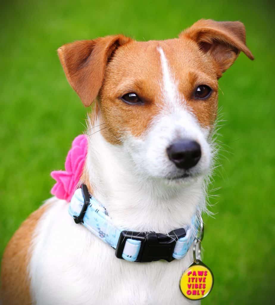 Powsitive Vibes Dog tag