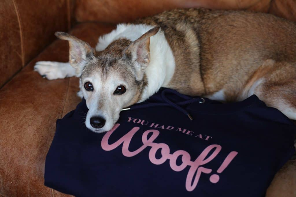 You Had Me at Woof Hoodie Scruffy Little Terrier