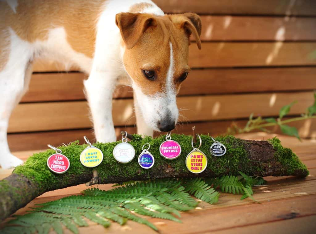 Pawesome Pet Identity Tags for Dogs