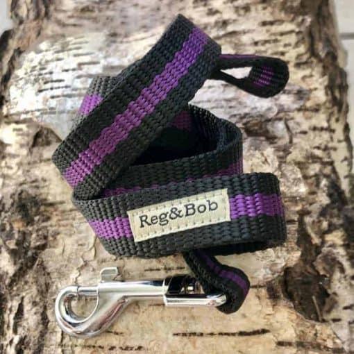 purple dog lead