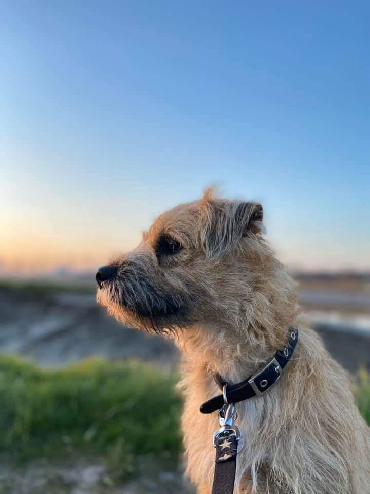 Pet Care Services Wrexham