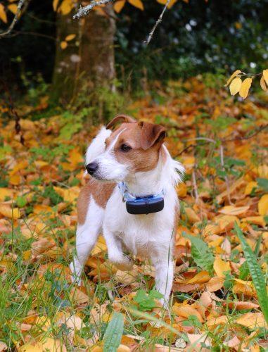 Tractive Dog Tracker