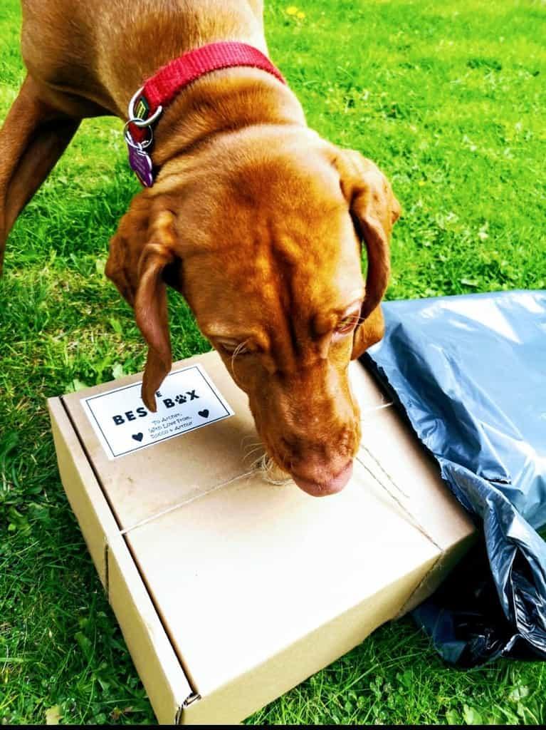 The Best Box Dog Subscription Box