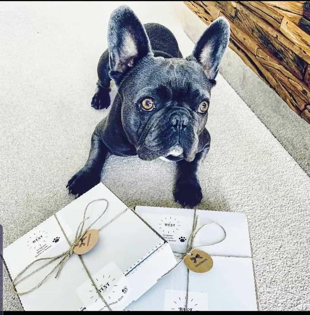 The Best Box Dog Munchie Box