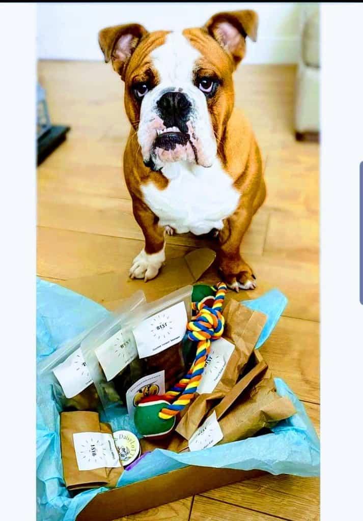 The Best Box Dog Treat Box