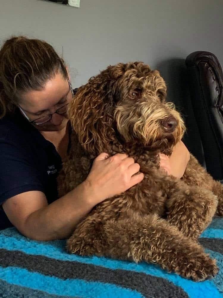 Born to Run Dog Massage
