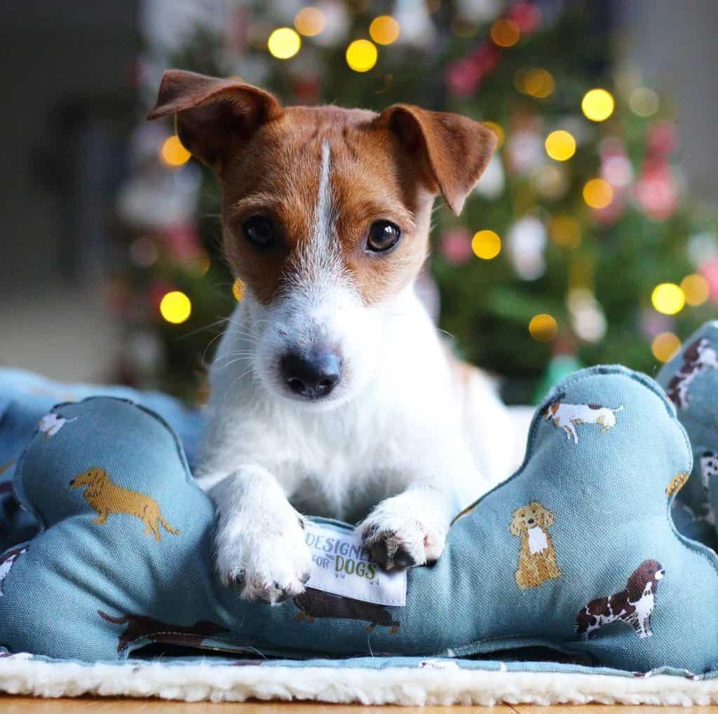 Designed for Dog Sophie Allport Dog Blanket and Bone