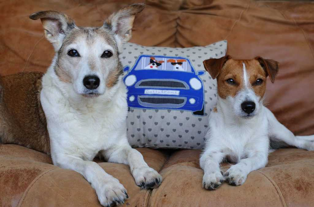 Bespoke Handmade Dog Cushion for Dog Lovers