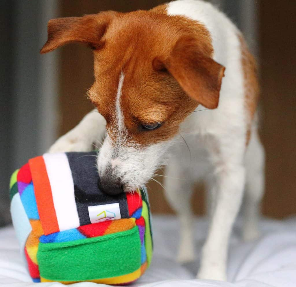 Challenger Cube Dog Enrichment Toy