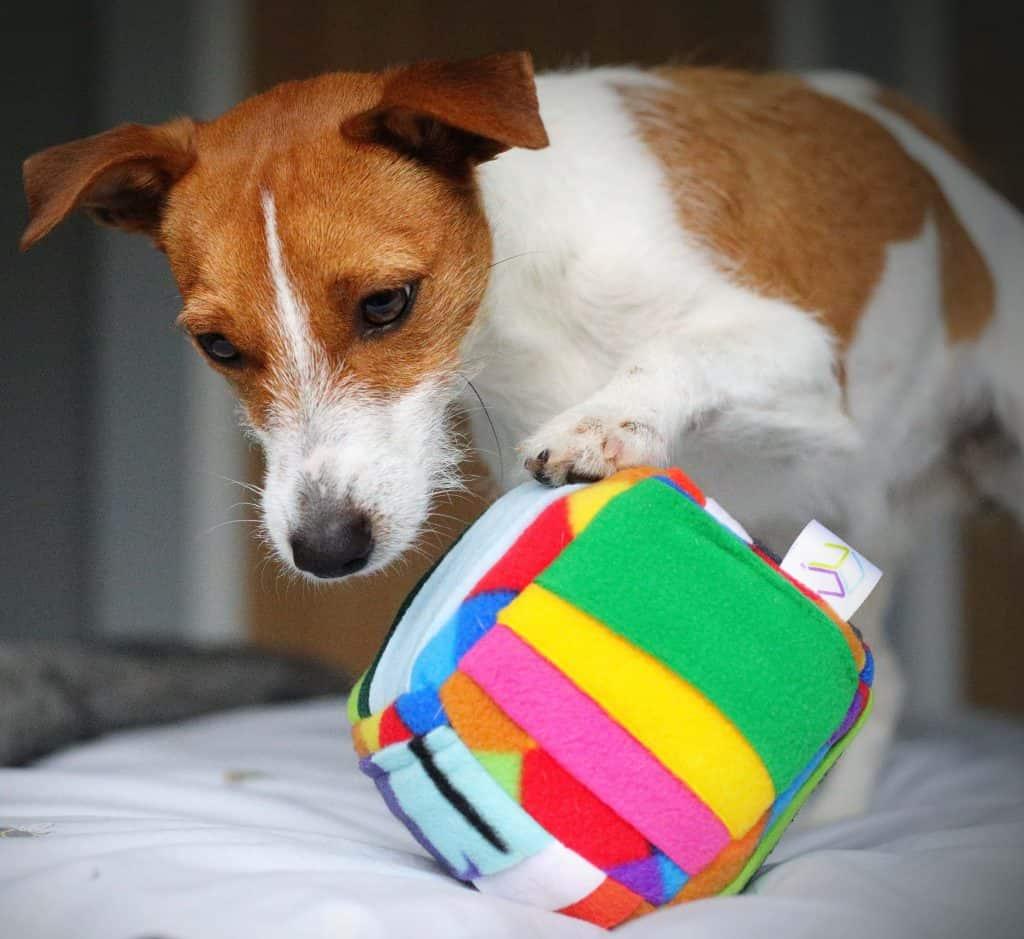Challenger Cube Dog Enrichment Puzzle