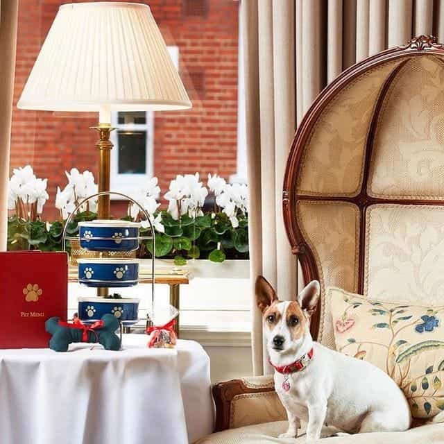 The Egerton House Hotel Dog Friendly London