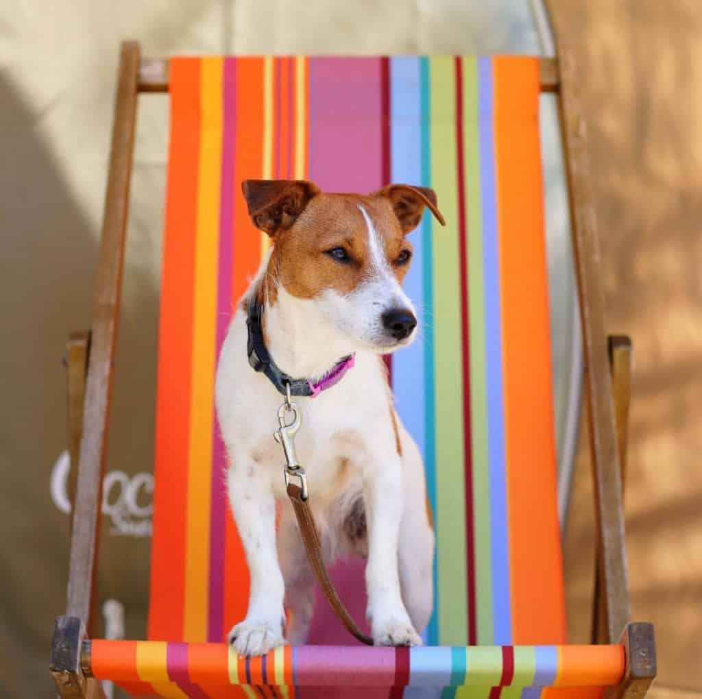 Dog on Deck Chair at Oakdown Holiday Park