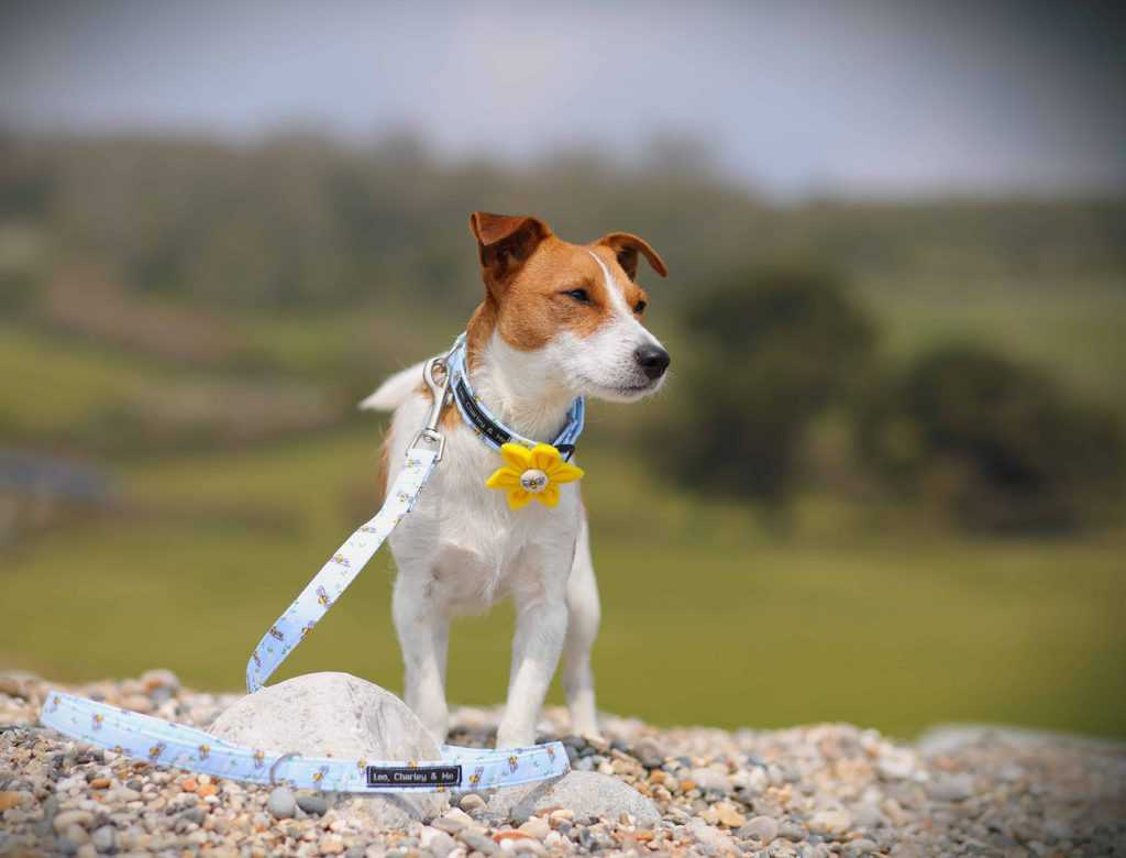 Leo Charley and Me Dog Collar and Lead UK Busy Bees Set
