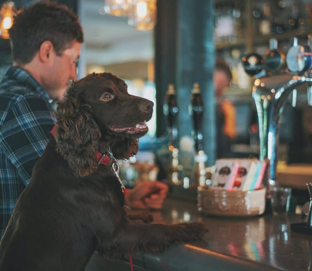 Spaniel at Dog Friendly Bar