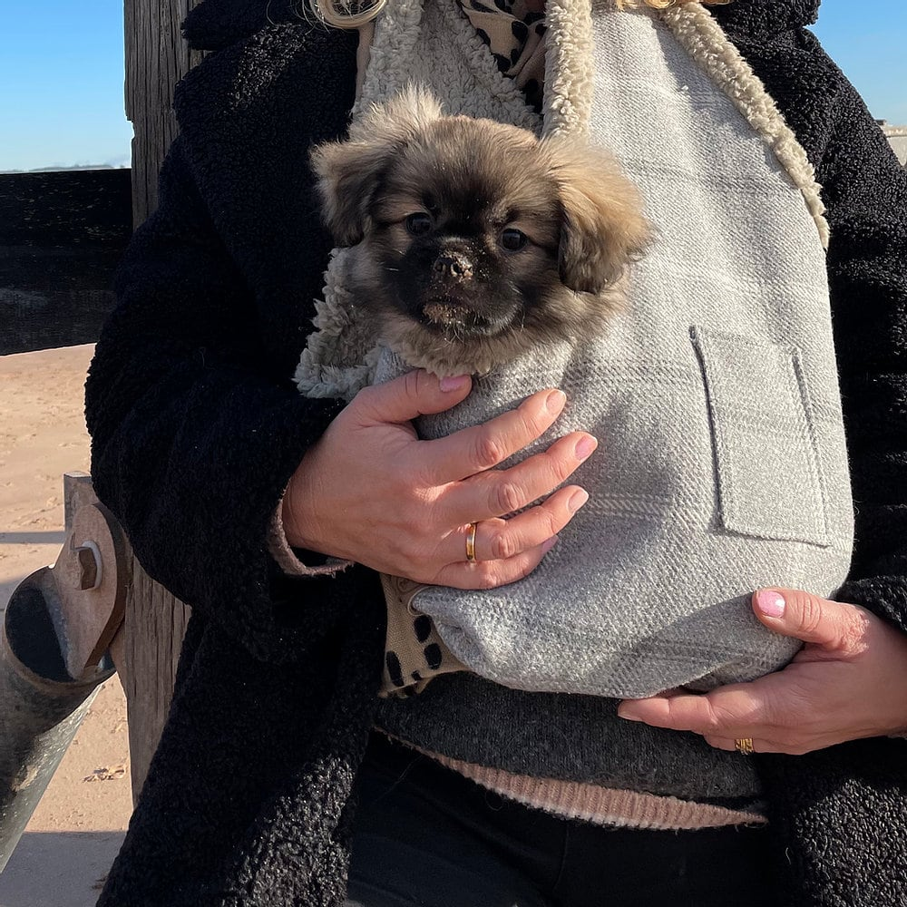 Puppy Carrier The Artisan Dog Co