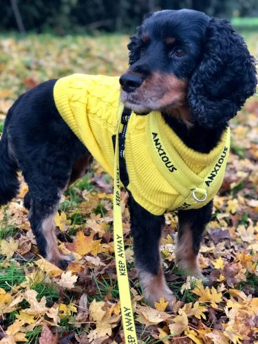 Anxious Dog Yellow Vest